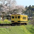 写真: いすみ350形と桜 002
