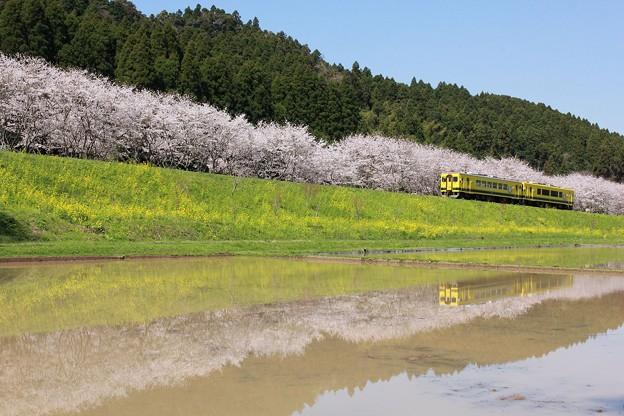 写真: いすみ鉄道 築堤を登る
