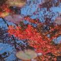 hiro 君のための 水鏡の中の紅葉 「 夢の扉 」