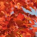 秋の日に 012
