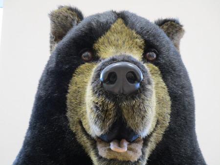 熊さんに出会った・1