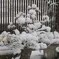 お花が雪玉にΣ( ̄ロ ̄lll)