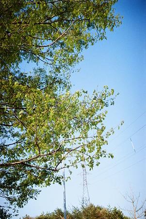 tree_Solaris200_05062011smena