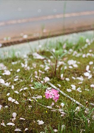Shibazakura_OLYMPUS_PEN_FT_Kodak_PORTRA160NC_05092011-01