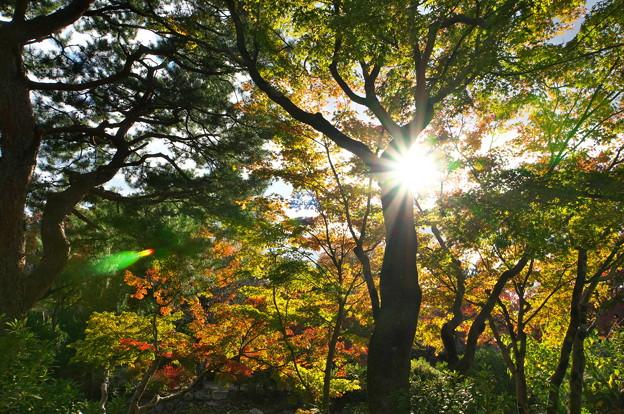 Photos: もうすぐ紅葉の光
