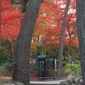 紅葉の下の電話ボックス