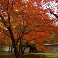 日本庭園は 苔が重要ですね!