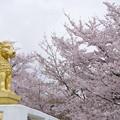 ライオンと桜
