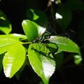 3・2匹で飛んで葉の上に・・つづく