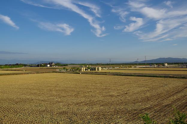 刈りとりが終わった麦畑