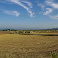 写真: 刈り取りが終わった麦畑