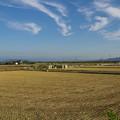写真: 刈りとりが終わった麦畑