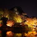写真: 小船山楽園 ライトアップ