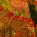 写真: 日本の秋