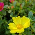 写真: お花