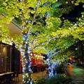 写真: 東京スクエアガーデン