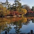 写真: 湖畔之秋