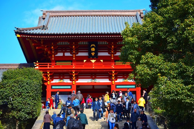 鶴岡八幡宮拝殿 #湘南 #鎌倉 #kamakura #japan #mysky #神社 #shrine
