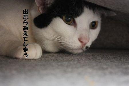 samuikara5