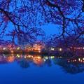 写真: 宵桜.......