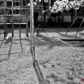写真: 思い出はモノクローム.......