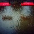 写真: Nobody but rain........