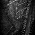 写真: 猿梯子.......