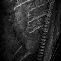 Photos: 猿梯子.......