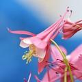 写真: 春色ファンファーレ