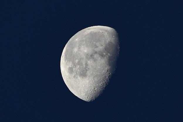 写真: 夜明けのお月さん