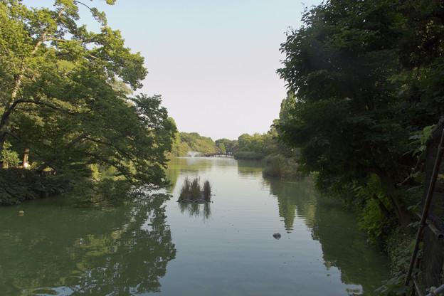 井の頭池 [井の頭公園]