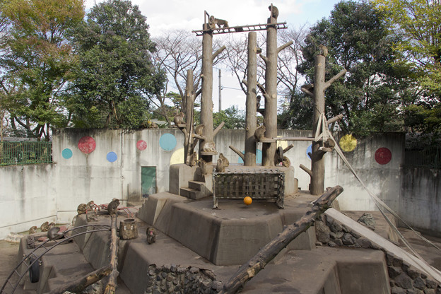 サル山 [羽村市動物公園]