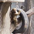 子猿 [羽村市動物公園]