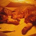写真: 向かい合って爆睡中。仲間に入りたいくらいに俺も眠い…( ̄―+ ̄)
