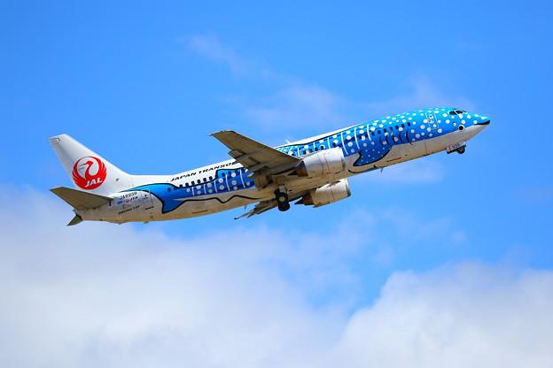 日本トランスオーシャン航空 Boeing 737-400 (JA8939)