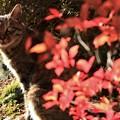 Photos: 庭のねこ