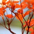 写真: 燃える秋