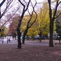 朝の公園002asa