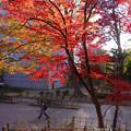 Photos: 摺鉢山pa413momiji2