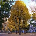 Photos: 野口英世の森pa484ichou