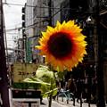 写真: 街なかの太陽
