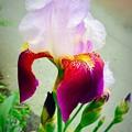 五月の色香