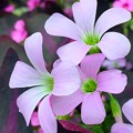 写真: 街のお花