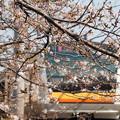 写真: 桜と南武線1