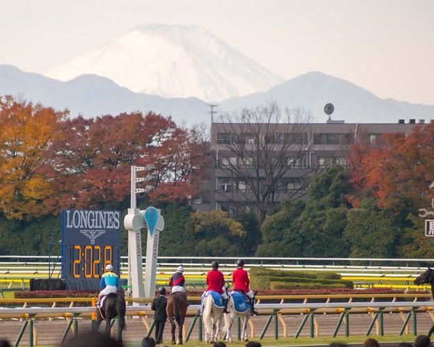 富士山@東京競馬場