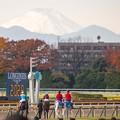 写真: 富士山@東京競馬場