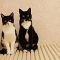 Photos: 双子の兄と妹