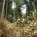 妖精の森(^^♪
