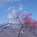 写真: 日光に春を告げる