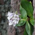 写真: ど根性花